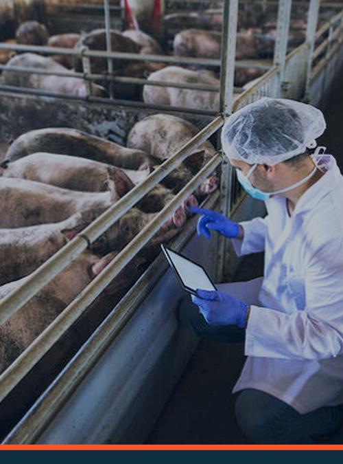 O que avaliar na escolha do software de comunicação para sua agroindústria?